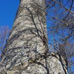Schreckenbergturm