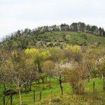 Kirschenland