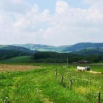 Wanderweg nach Kammerbach