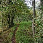 Wanderweg_an_der_Boyneburg