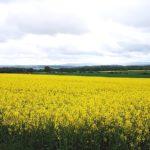 Landschaft bei Goldhausen