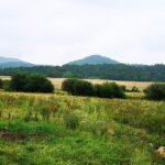 Feuchtgebiet Bruchwiesen