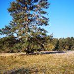 Hute-Wald