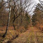 Der Weg zwischen den Jahreszeiten