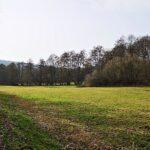 Wiesengrund Ingelheimbach
