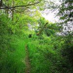 versteckter Wanderpfad am Weidelsberg