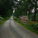 Forstweg am Roten Stock