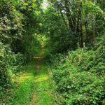 Wanderweg v. Ostheim zum Kramberg